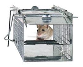 Havahart-1020-trap-with-mouse-300x241