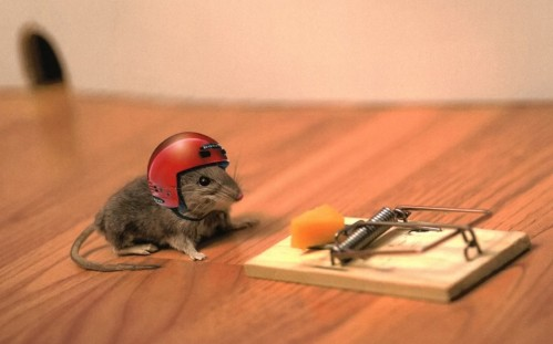 mouse-cheese-mouse-trap-helmet-funny-situation-free-stock-photos-images-hd-wallpaper
