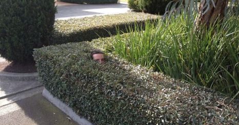 gardener-sends-photos-disappears-into-bushes-fb__700-png